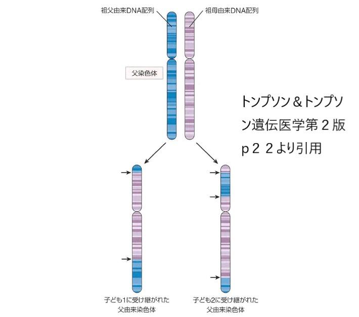 染色体相同組換え